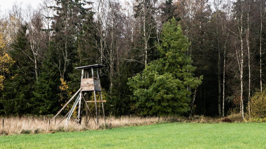 Bukkejagt jagttårn skydetårn hochsitz