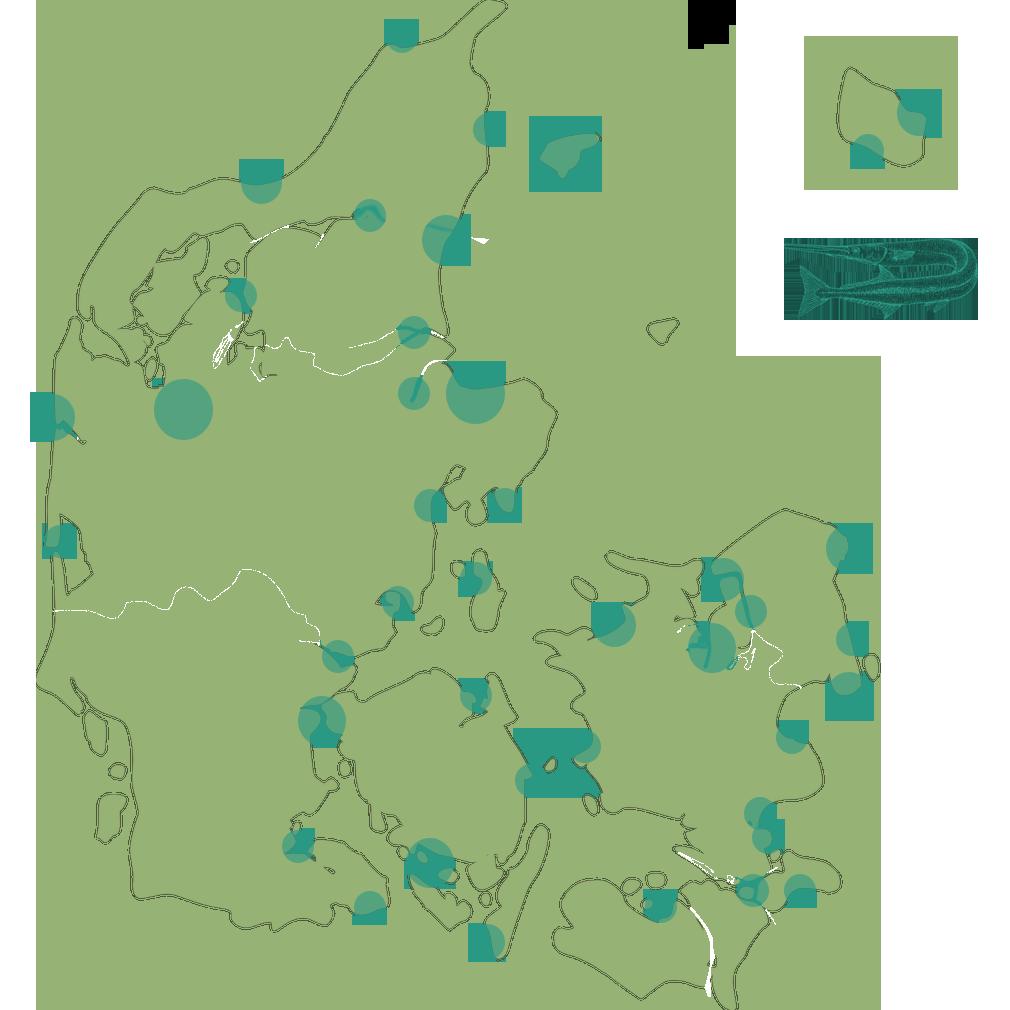 Hornfisk fiskepladser fiskespots danmark