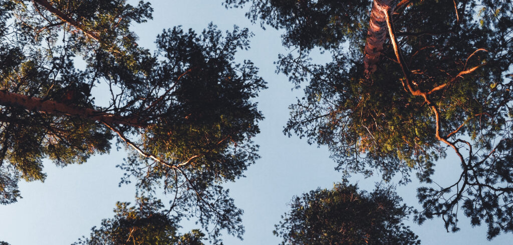 Telttur Letvægtstelt skovtur grantræ